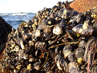 perfume_mussels