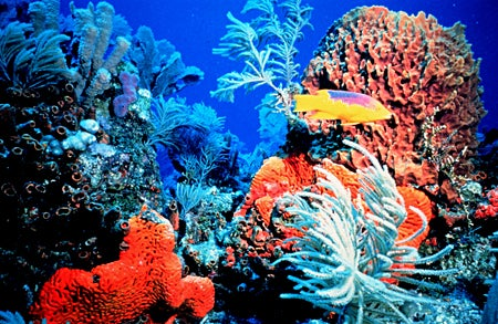 scientists deliver plan for rescuing america s coral reefs florida keys national marine sanctuary reef