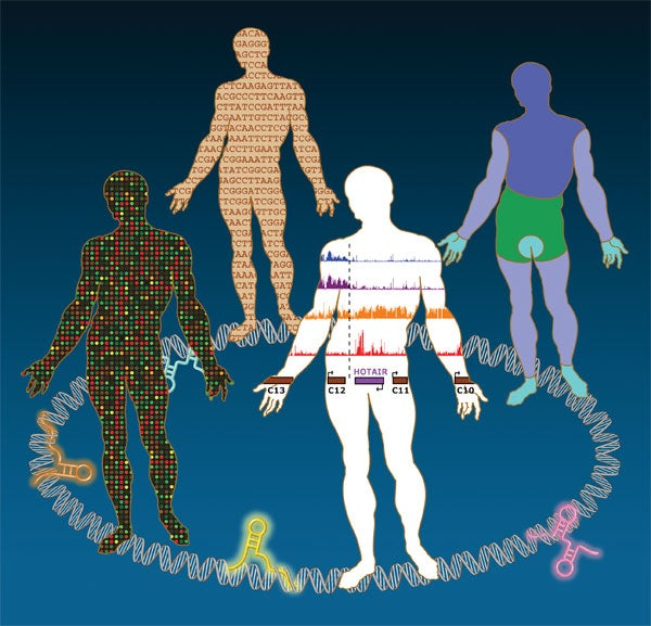 human genomic sequence