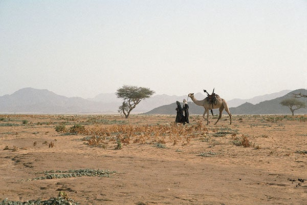 Tuareg and camel