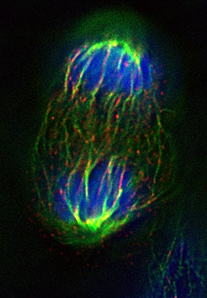 Researchers unmask powerhouse proteins in telomerase