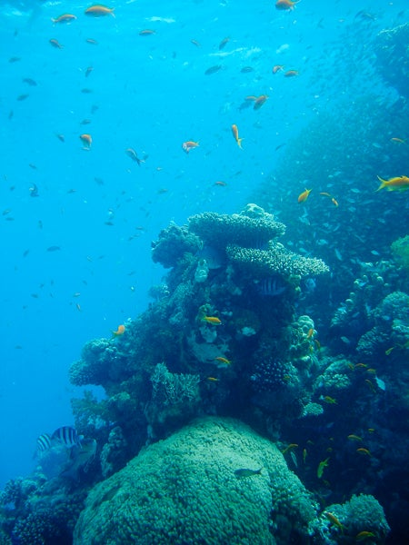 Moses Rock in the Gulf of Aqaba