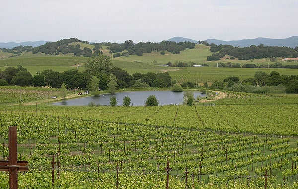 A Napa Valley vineyard with a reservoir of the type that growers typically use to store water from the winter rains that is used to irrigate the vines in the hot, dry summer.