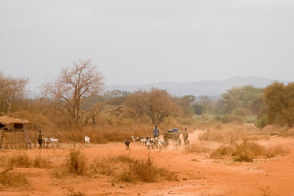 Farmers and pastoralists in a maize growing regions of Eastern Kenya.  A new study finds that climate change could severely harm crop productivity and increase the likelihood that disadvantaged rural populations will take up arms.