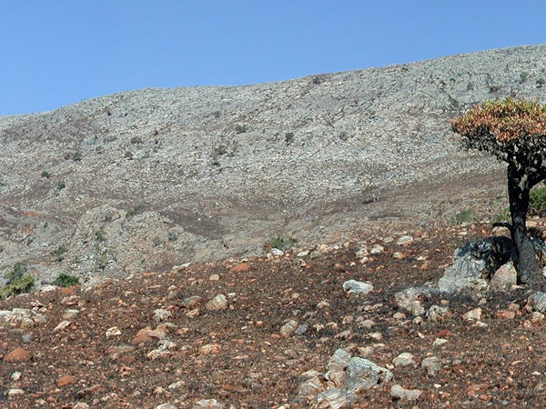 Buck Reef Chert: The outcrop that provided samples for this study.