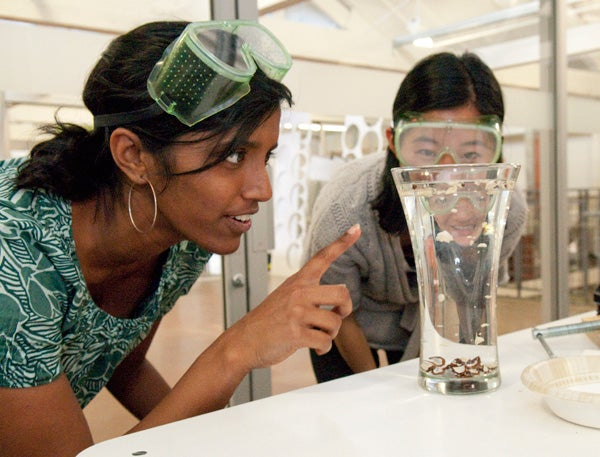 Co-term grad student Indu Premakumar and GSB student Joy Sun work on a project to develop a tool for more efficiently processing candle nuts for their 'Design for Extreme Affordability' class.