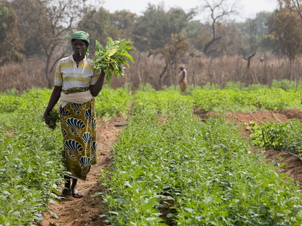 The crops on this small farm in rural Benin are watered by a solar-powered drip irrigation system.