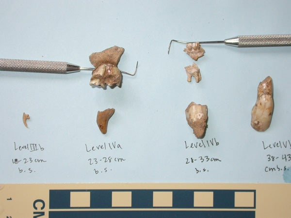 Teeth and claws excavated from Samwell Cave
