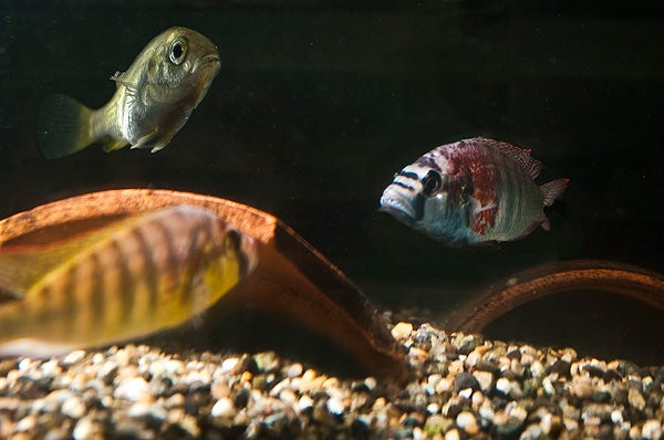 Composite image to illustrate fish reactions