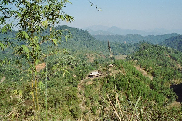 Reforestation in Vietnam