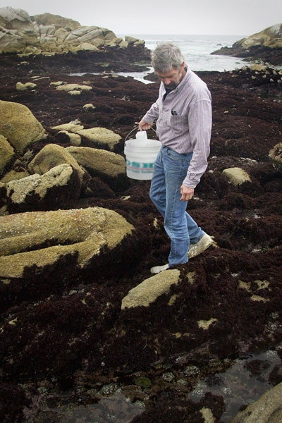 Steve Palumbi collects samples along the Monterey Bay