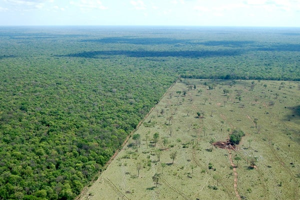 Clear cutting for agriculture in Brazilian Pantanal.