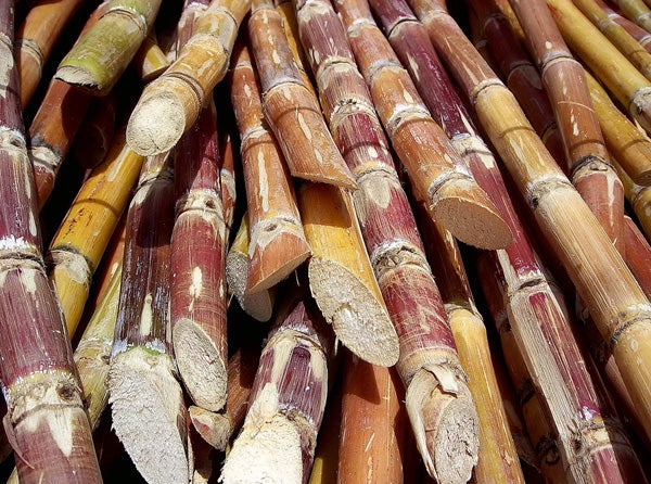 Sugarcane lies stacked in a pile after harvesting