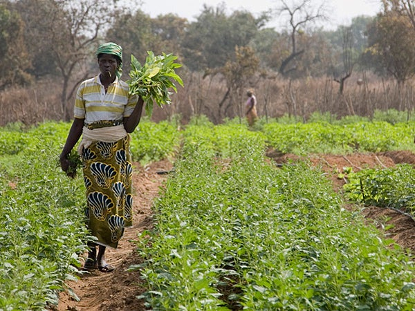 Woman walking through rows of crops in rural Benin