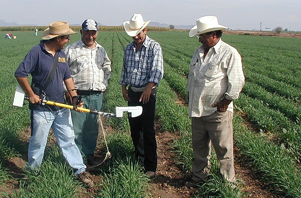 Farmers in Mexico's Yaqui Valley use a nitrogen sensor