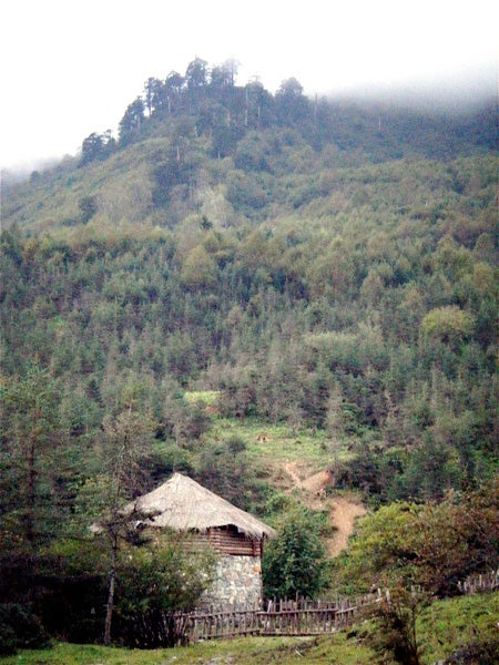 Forested hills in China