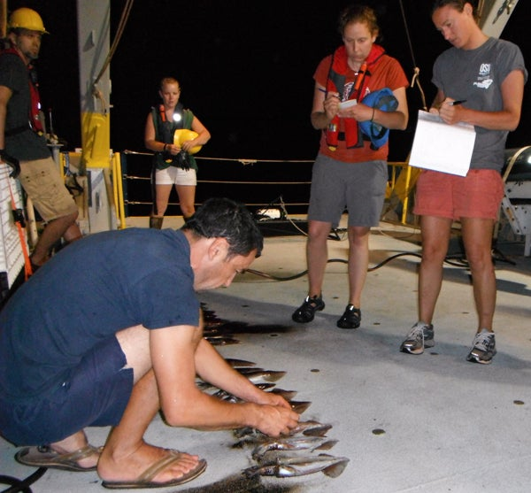 A researcher examines small squid on the ship's deck.