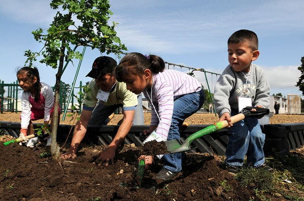 Elementary school children planting a tree