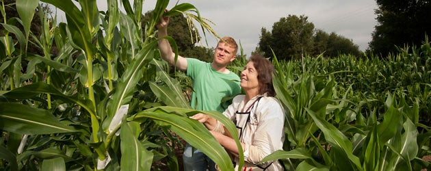 Graduate student Tim Kelliher and Professor Virginia Walbot examine corn tassels in the field on the Stanford campus.