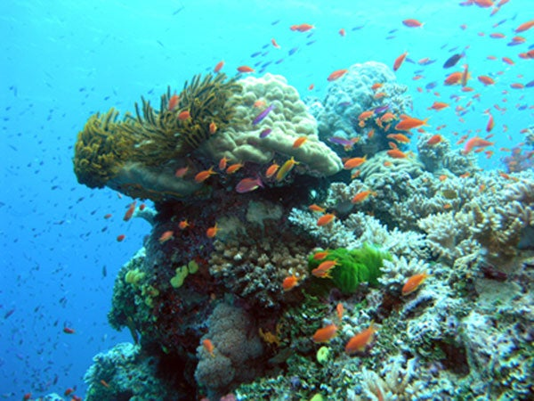 Diverse and healthy coral reef in the Great Barrier Reef, Australia.