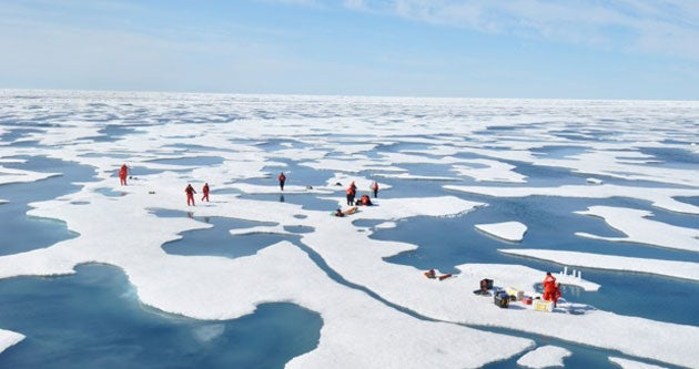 Researchers studying the algal bloom under Arctic sea ice