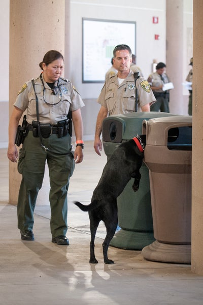 Deputies Carrie DeVlugt and Eric Fenton continue the investigation with scent-detecting dog, Hope, in the Stanford Stadium concourse.