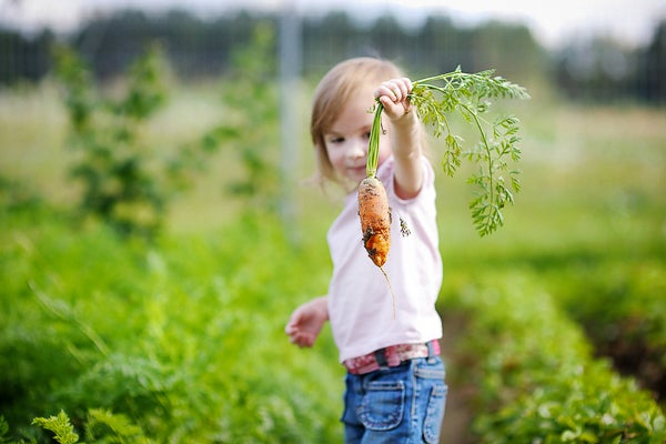 Preschool-age girl holding a carrot in a field