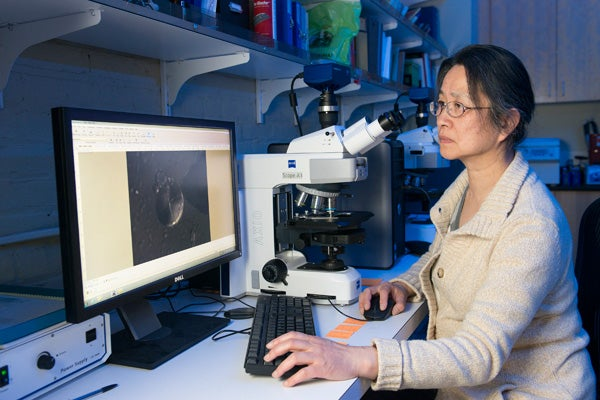 Using a microscope, Li Liu finds and records starch grains extracted from ancient tools