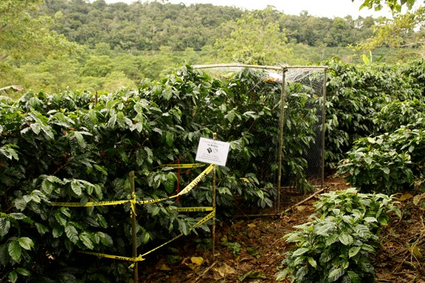 Enclosure experiments on coffee farm in Costa Rica