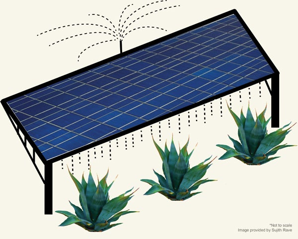 solar panel and crops