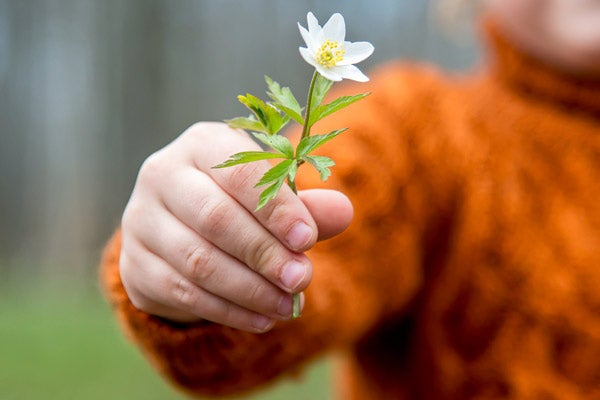 child's hand giving a flower