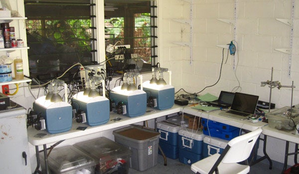 Palumbi lab