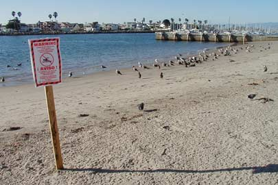 Warning sign on beach. Photo: Cara Smith/Heal the Bay