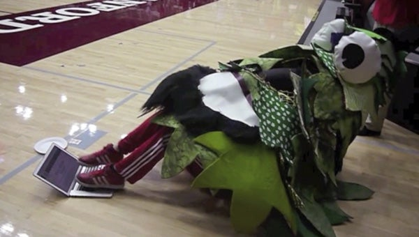 Stanford Tree using a laptop