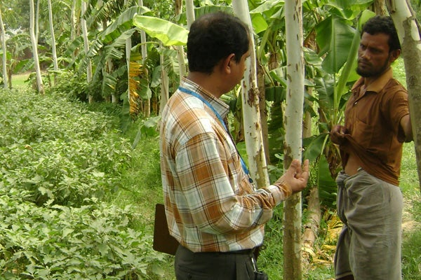 Researcher interviewing a farmer about frequency of pesticide use on eggplants.