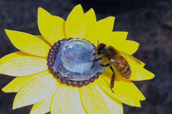bee on artificial flower