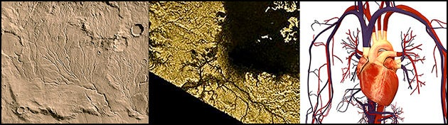 Branched networks (left to right): on Mars, on Titan, human circulatory system
