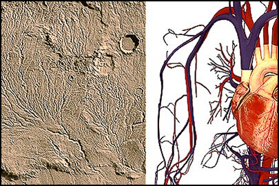 branched networks on Mars and in the human circulatory system / NASA/JPL and Wikimedia Commons