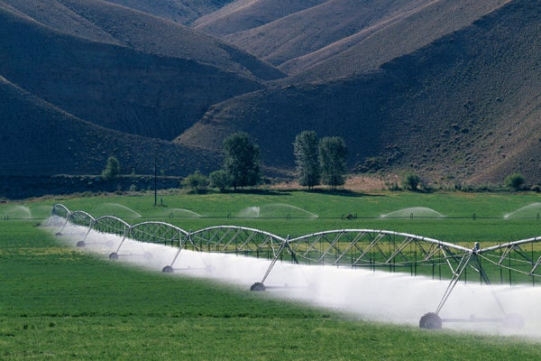 farmland being irrigated
