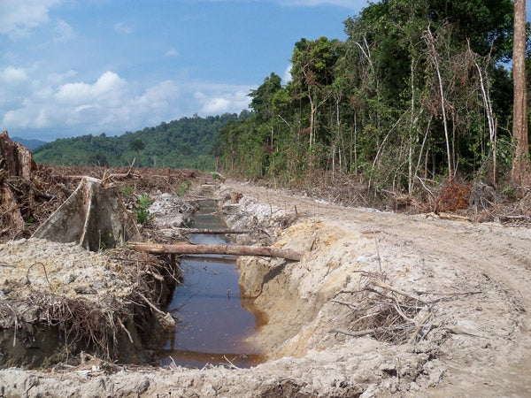 land cleared for oil palm plantation in Indonesian Borneo