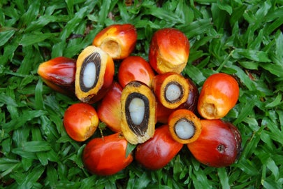 oil palm fruits / Yadi Purwanto