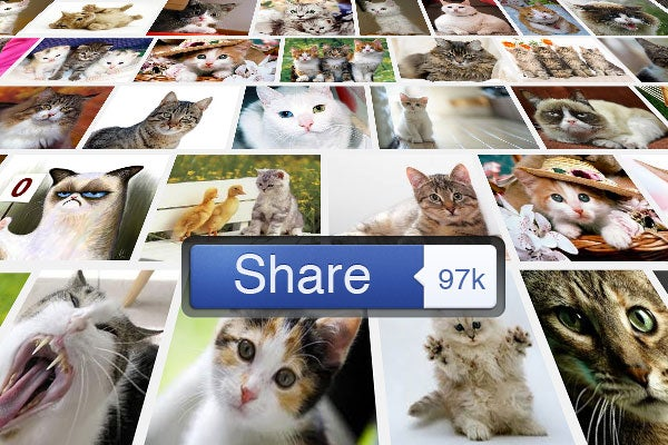 many shared photos of cats