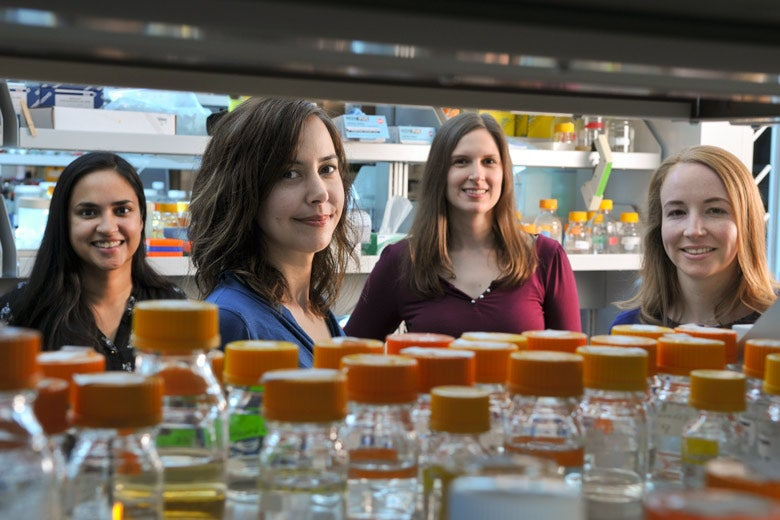 research team members Isis Trenchard, Christina Smolke, Stephanie Galanie and Kate Thodey