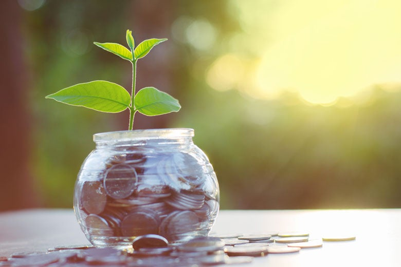 plant sprouting from a bowl of coins / Singkham/Shutterstock