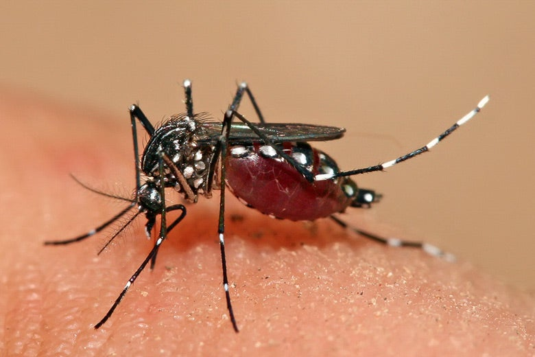 Close-up of a mosquito on human skin.