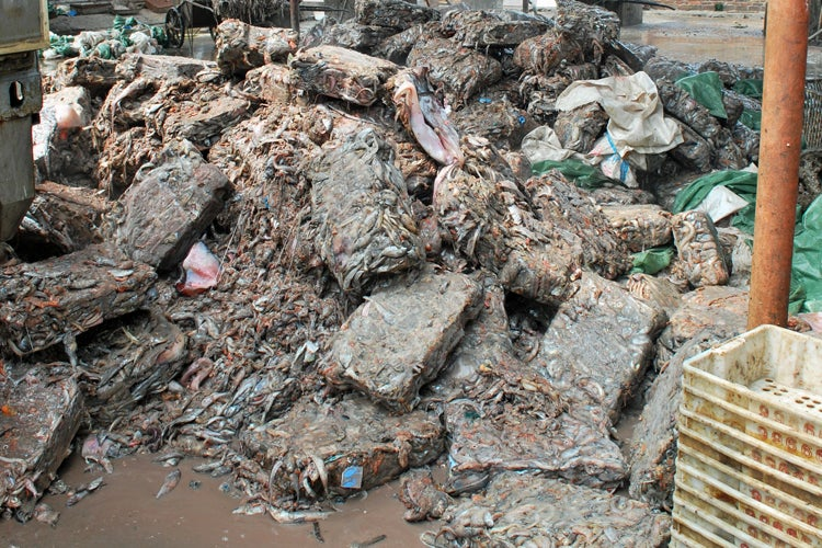 piles of frozen fish that will be used to produce low-quality fishmeal at Guangdong, China, factory