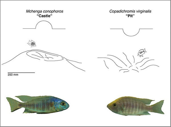 stanford biologists show how the evolution of physical