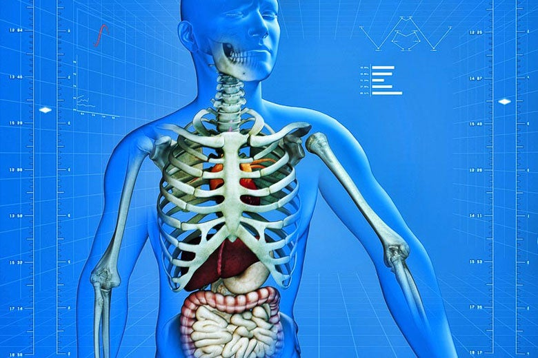 view of internal organs and skeleton in a see-through body supeimposed on a graph / vitstudio/Shutterstock
