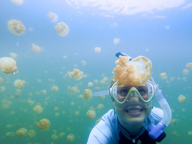 student Meghan Shea diving with jellyfish in the Pacific