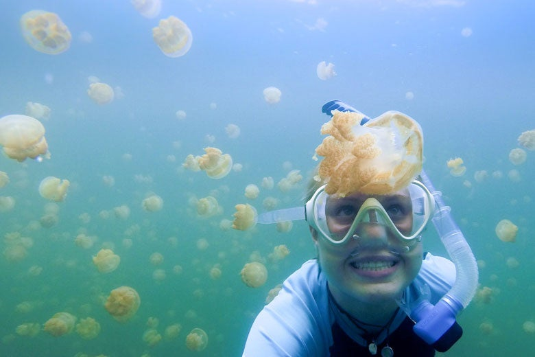 student Meghan Shea diving with jellyfish in the Pacific / Meghan Shea